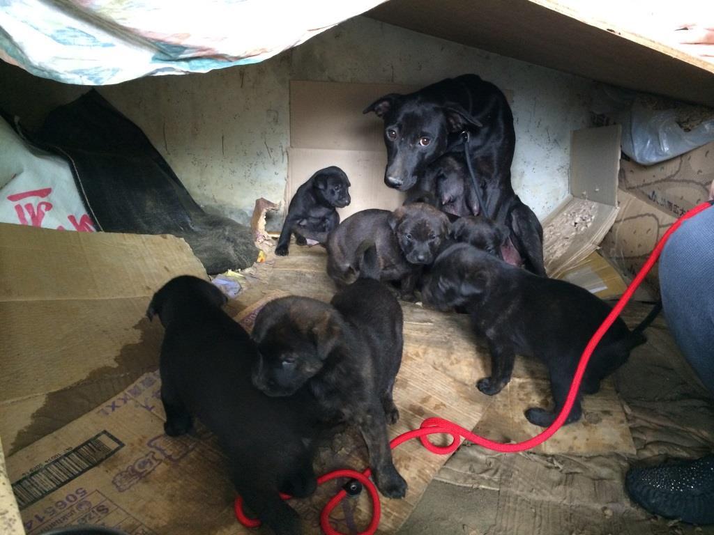 Mary S Dog Rescue
